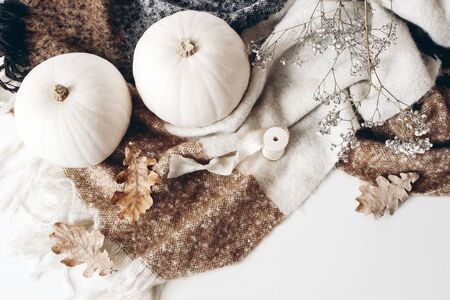 Autumn, cozy composition, winter scene with white pumpkins, dry oak leaves, gypsophila flowers, brown wool plaid on white table background. Thanksgiving, fall, Halloween concept, flat lay, top view.
