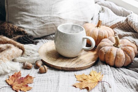 Cozy autumn morning breakfast still life scene. Steaming cup of hot coffee, tea standing on wooden plate near window. Fall, Thanksgiving concept, orange pumpkins, acorns and maple leaves, wool plaid.