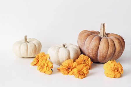 Autumn still life scene with marigold, tagetes flowers and orange, white pumpkins on table background. Fall, Halloween and Thanksgiving concept. Styled stock photography, web banner.