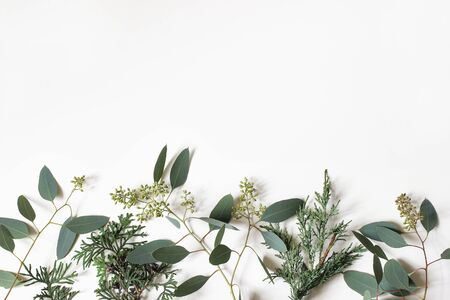 Christmas floral frame, web banner. Border of green cypress, juniperus and berry eucalyptus tree branches isolated on white table background. Winter natural decoration.Botanical flat lay, top view. Stock fotó