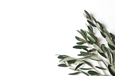 Floral composition of green olive tree leaves and branches isolated on white table background. Botany styled stock flat lay image, top view. Copy space, no people. Summer Medditeranean frame.