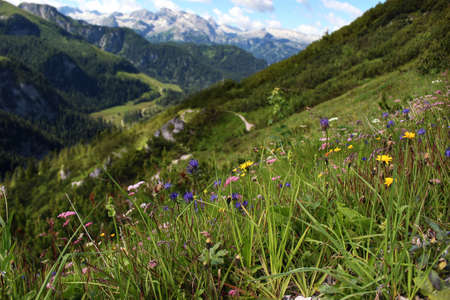 Beautiful Alps mountains view. Blooming meadows and hiking path in sunny summer day. Mount Jenner at the Berchtesgadener Land. National park, Bavaria, Germany. Europe travel concept. Stock fotó