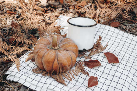 Closeup of coffee cup, enamel mug with orange pumpkin on white checkered blanket in sunny day. Defocused autumn forest background with dry fern leaves. Fall outdoor meal, relaxation concept.