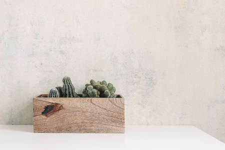 Set of green succulents and cactus in wooden pot on a white table. Trendy potted plants in interior. Grunge wall background. Empty copy space for text. Interior lifestyle web banner. Stock fotó