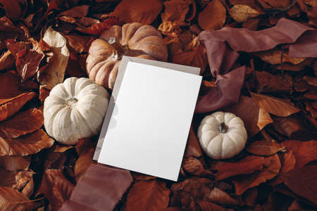 White and orange pumpkins, silk ribbon on dry red beech leaves ground. Blank greeting card, craft envelope mock up scene. Autumn forest background. Fall, Thanksgiving and Halloween celebration concept