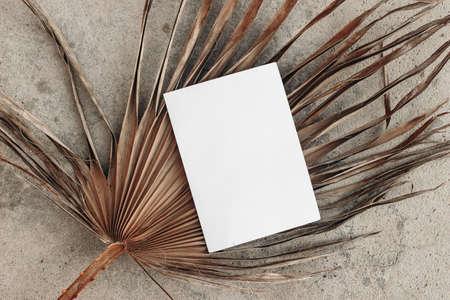 Dry palm leaf on grunge beige concrete