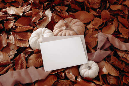 Fall, Thanksgiving and Halloween celebration concept. White and orange pumpkins, silk ribbon on dry red beech leaves background. Blank greeting card, craft envelope mock up. Autumn forest scene Stock fotó