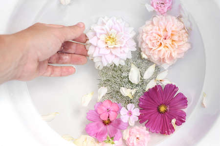 Spa, regeneration concept. Closeup of woman hand. Pink phlox, roses, dahlia and cosmos flowers floating in white bowl of water. Feminine summer tranquile lifestyle composition. Garden relaxation. Stock fotó