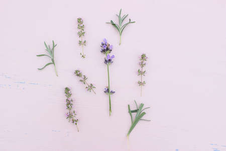 Blooming lavender and thyme herbs on pink table. Healthy herbal flowers and leaves pattern composition. Decorative floral background, web banner. Aromatherapy plants concept. Stock fotó