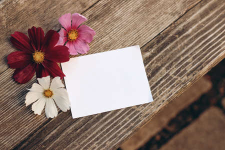 Floral stationery still life scene. Blank greeting card mock-up on old wooden table background with white and pink cosmos flowers. Flat lay, top view. Feminine birthday or wedding composition.