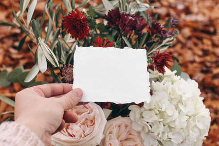 Autumn wedding, birthday mockup scene, composition with olive branches and pink rose flowers. Closeup of womans hands holding blank greeting card. Blurred fall background with red beech leaves.