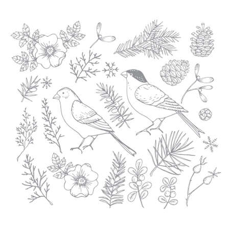 Set of Christmas birds and floral illustrations. Bullfinch and golden finch with flowers, leaves and fir and pinte tree branches and cones. Rose bloom, hips engravings. Isolated vector illustration. Vector Illustratie