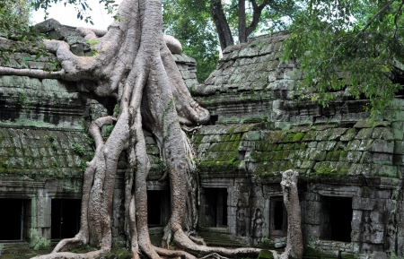 the hidden jungle temple ta prohm near angkor wat in siem reap,cambodia is one of the most fascinating places on planet earth   Stock Photo