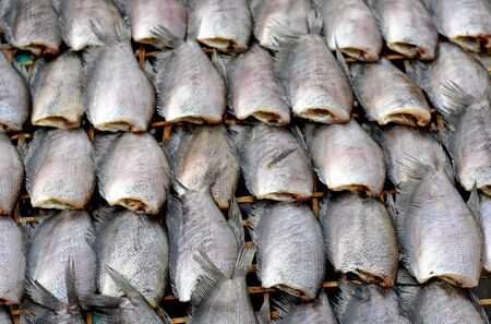 fresh mackerel fish  at market, Thailand  photo