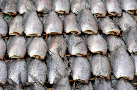 fresh mackerel fish  at market, Thailand Stock Photo - 16135208