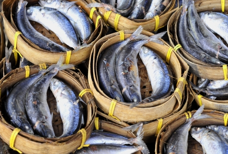 fresh mackerel fish  at market, Thailand  photo