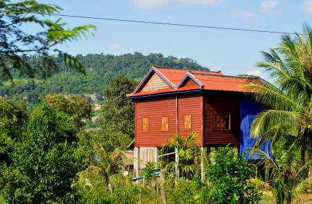 rice paddy: village house on stilts in cambodia
