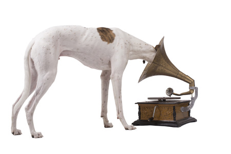 Greyhound and an old gramophone isolated on a white background