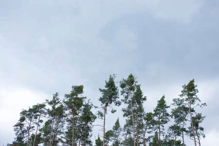respire: Trees in the forest as a background