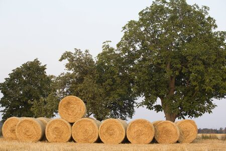 central europe: Straw bales on a farmland in central Europe