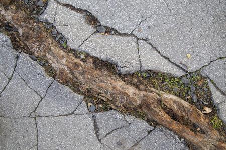Gebarsten asfalt, wortel Stockfoto