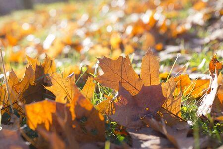 Fallen leaves on a ground, season, autumn Stock Photo