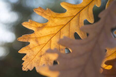 Yellow leaf on a branch, season, autumn Stock Photo