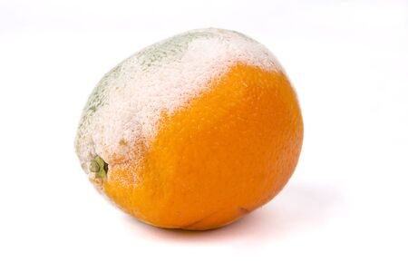 Mouldy orange on a white background, rotten fruit