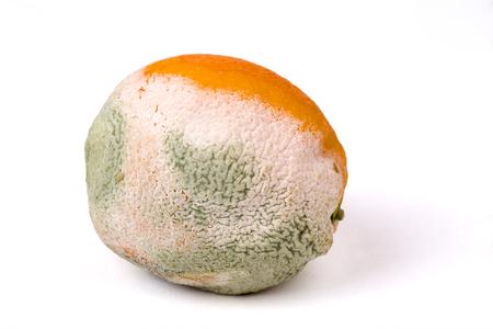 Mouldy orange on a white background, fruit, rotten