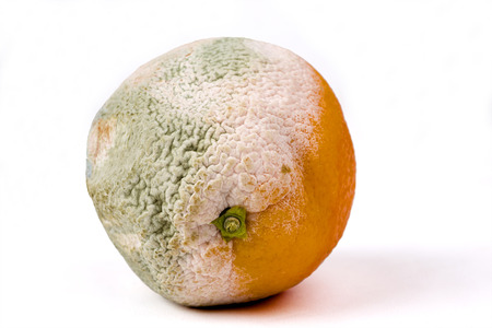 Mouldy orange on a white background, fruit, rotten
