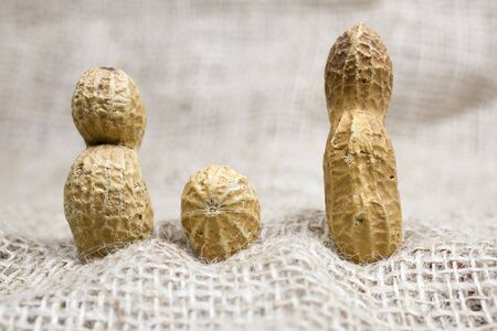 Peanuts family, three nuts on a burlap Stock Photo