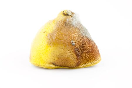 Moldy lemon on a white background, rotten