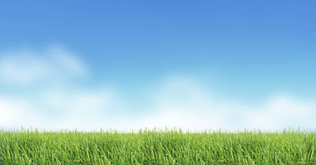 greensward: nature  background image