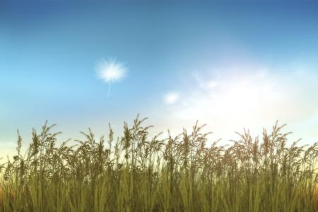 grass field: abstract grass field in sunset
