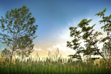abstract grass field in sunset