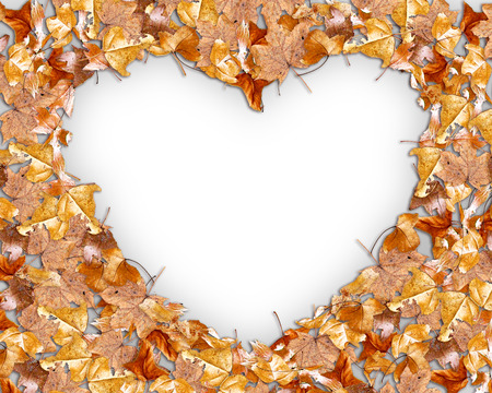 heart shaped leaves: Autumn Leaves Shaped Heart  on Road Stock Photo