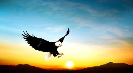 halcones: águila volando en el cielo hermosa puesta de sol 0 Foto de archivo