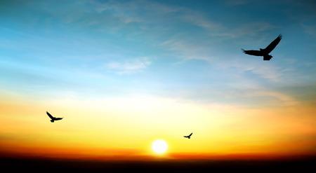 adelaar die in de hemel prachtige zonsondergang 0