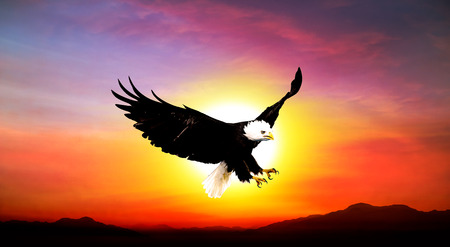 eagle flying in the sky beautiful sunset Stock Photo