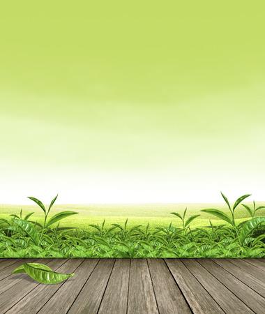 グリーン ティー 写真素材