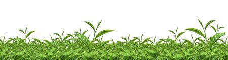 green tea Archivio Fotografico