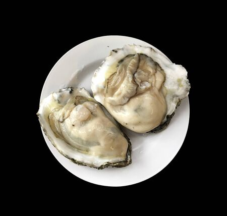 oyster shell: oyster shell isolated and seafood background