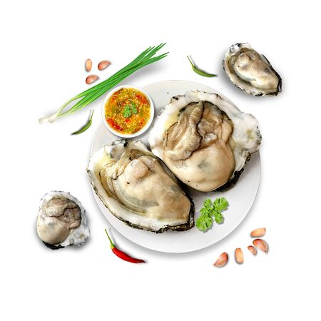 oyster shell: oyster seafood illustration