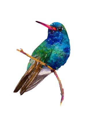 ハチドリのくちばしは幅広いの手作り水彩イラスト。エキゾチックな北アメリカ コリブリの美しい色。白い背景上に分離。オリジナル アート。