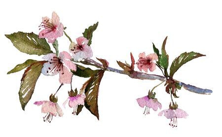 scrapbook background: Hand painted watercolor illustration of cherry blossom, sakura branch with pink flowers. Original art. Greeting card template.