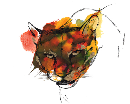 stealth: Head of pumacougarmountain lion, black and gold drawing on a watercolor splash. Isolated on white background. Graphic texture. Template for scrapbook. Element for your design.