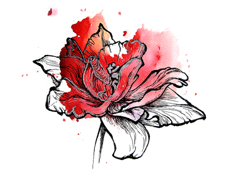 red tulip: Red tulip, handmade black and silver drawing on a watercolor splash. Isolated on white background. Graphic texture. Template for scrapbook. Element for your design.