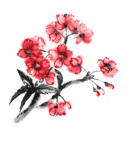 prune: Cherry blossom branch, oriental ink painting. Stock Photo