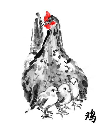 brooder: Hen with chicks, oriental ink painting with hieroglyph rooster. Sumi-e illustration isolated on white background. Symbol of the Chinese new year.