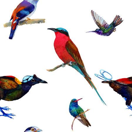 Seamless pattern with exotic birds. Hand painted watercolor. Isolated on white background. Fabric texture. Stock Photo